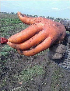 我都不敢相信它是胡萝卜