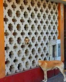 尼斯湖怪犬