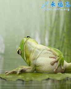 悠闲青蛙先生
