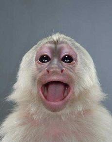 雷!猴子的丰富表情不逊人类3