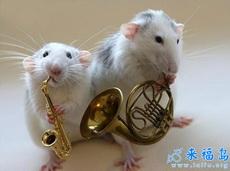 老鼠萨克斯