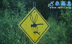 小心蚊子!