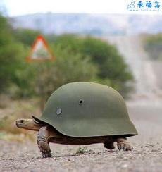 Turtle Battle Armor