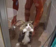 cat showering