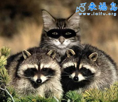 Animales falsos2