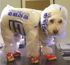 impermeable de perro