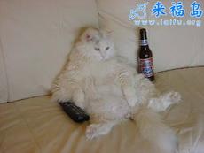 谁见过喝醉酒的猫啊!