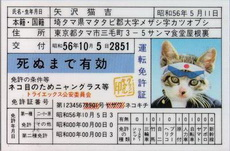 小猫的许可证