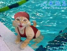 美女泳裝照