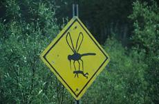 巨型昆虫出没