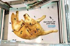 创意,给狗狗除跳蚤(虱子)广告
