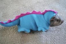 惊奇发现世界上最小的恐龙
