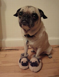 狗狗的拖鞋