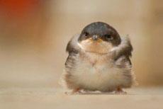 愤怒的小鸟真实版!