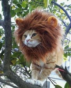 有没有人告诉你,偶其实是只狮子!!