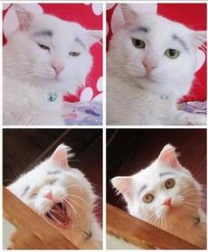 给猫猫画眉毛