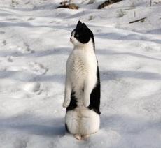 Stupido, no pretendas como un pinguino.