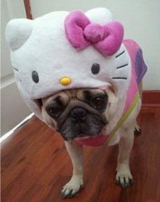 我以为你被kitty吃掉了