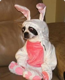 我是一只可耐的兔纸