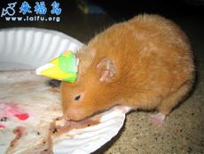 过生日的小老鼠