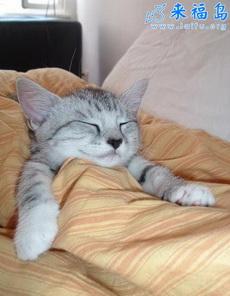 最甜蜜的睡姿