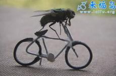 摄影师训练出苍蝇模特4