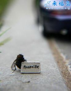 摄影师训练出苍蝇模特1