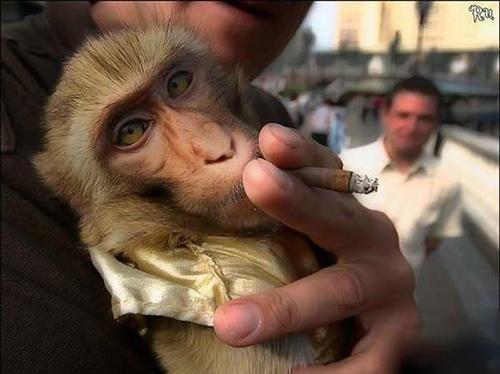 罗嗦一句:吸烟有害健康!