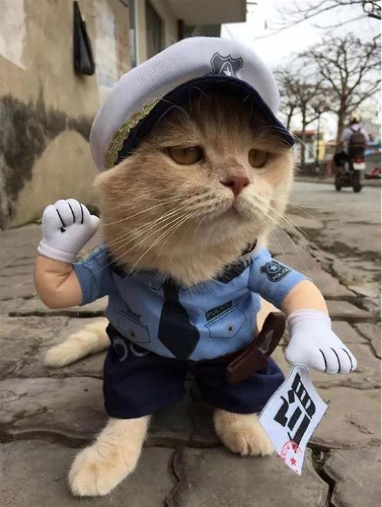一只在市集上出了名的猫咪