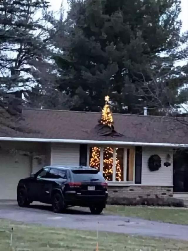 我家的圣诞树今年长大了