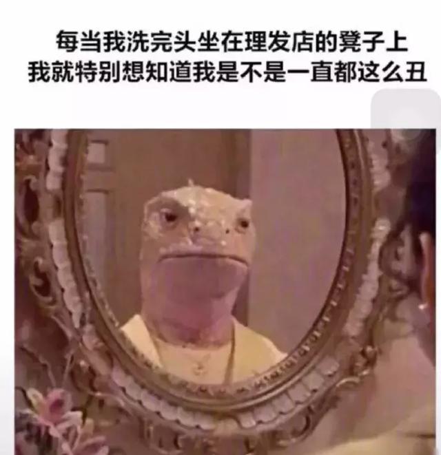 每次湿着头发往椅子上一座,我就觉得镜子里是一个猪头