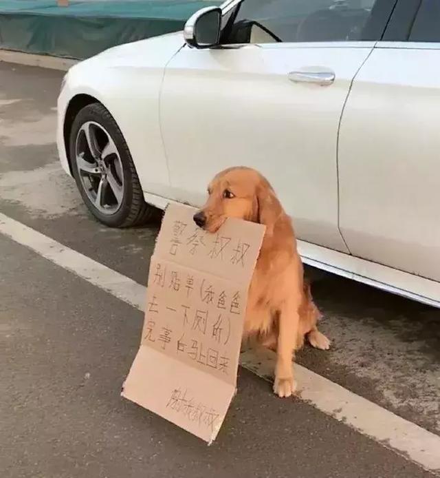 养狗千日用狗一时