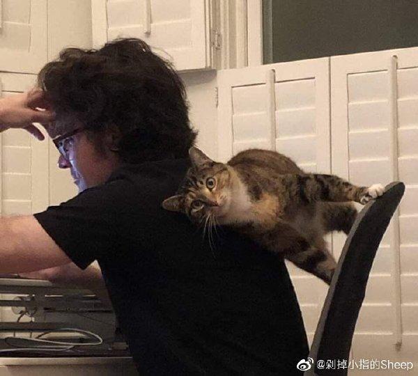 猫咪可以适应任何角度