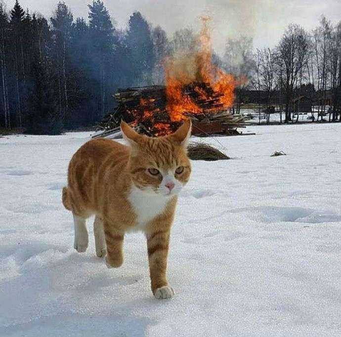 真正的猫咪不回头看爆炸