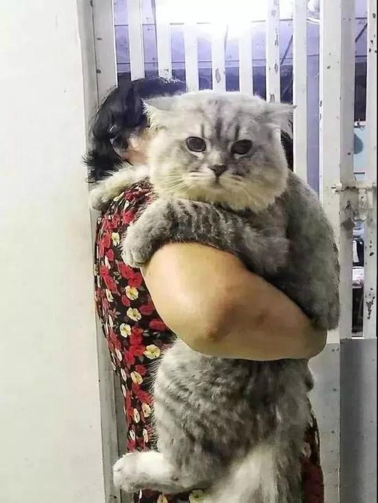 奶奶喂大的一头猫