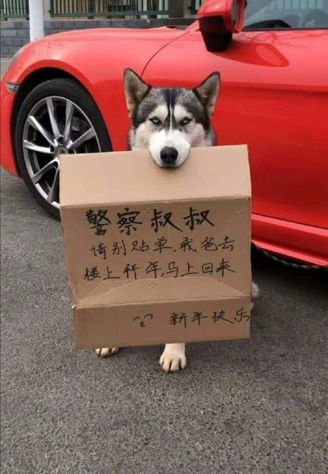 請看在狗的面子上一定要罰