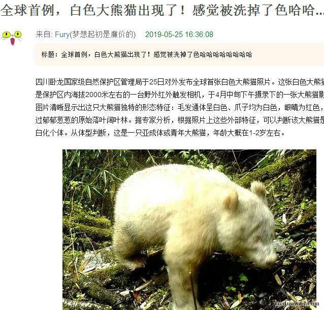 看样子是一只从来熬夜的熊猫[动物囄���]