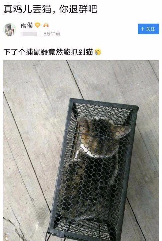 你家猫有点自闭