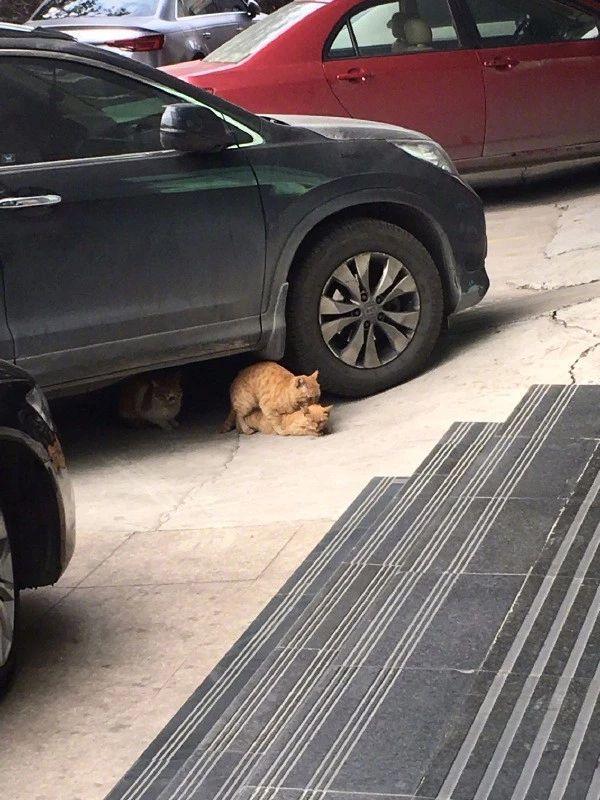 人家都已经躲到车底了你们还要这样步步相逼么?