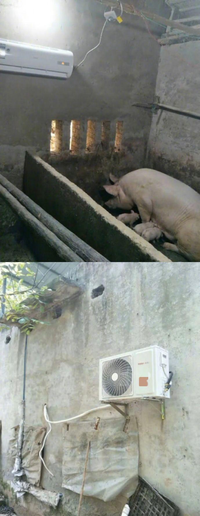 想拥有猪一样的夏天!做人不如做猪啊!
