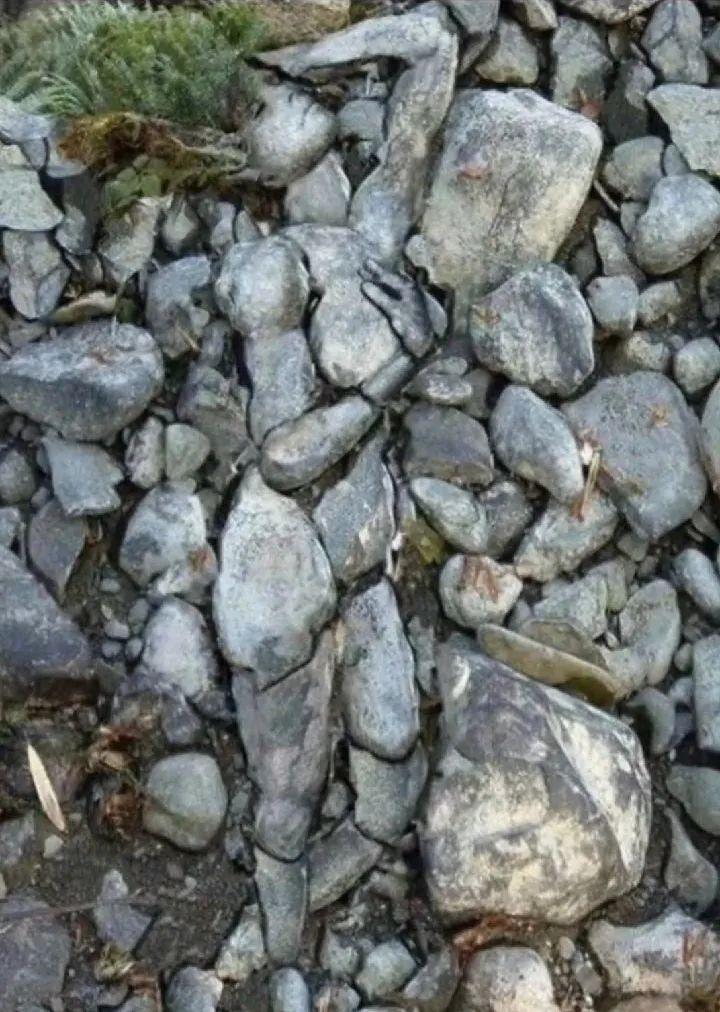 单身久了,溪边的石头看起来都眉清目秀的