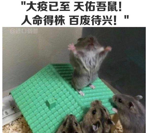 昨天小区进投放了鼠药