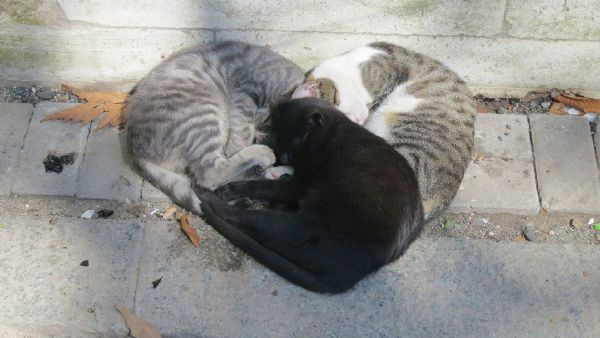 猫猫有爱心很不错