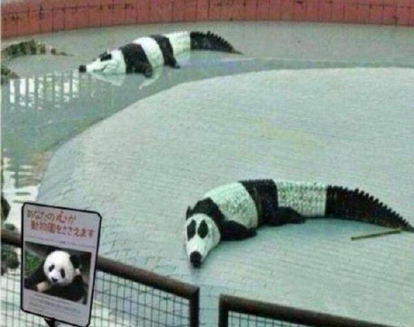 這熊貓咋感覺有些怪怪的呀