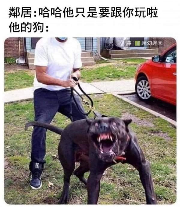 我家狗不咬人的